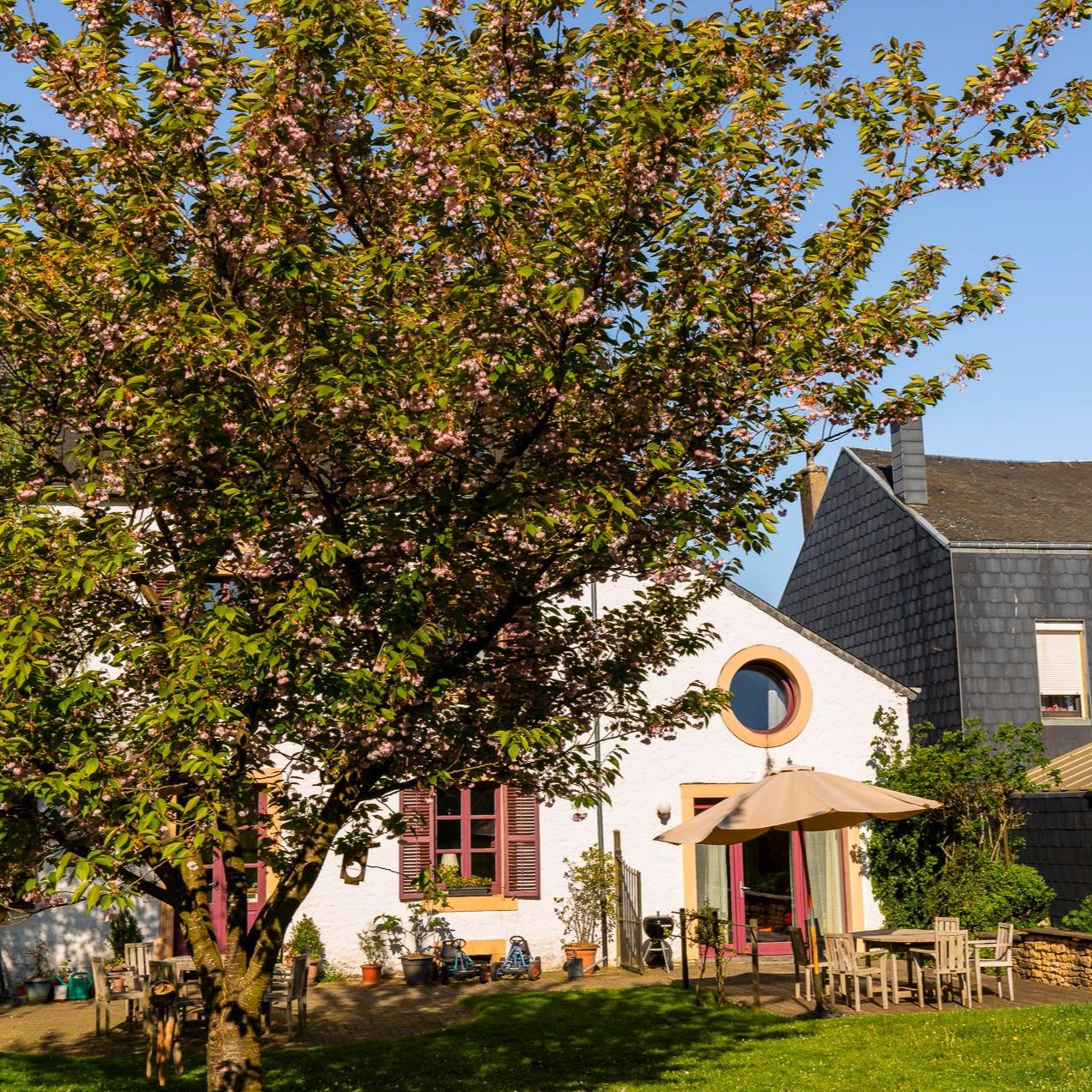 petite maison blanche cacher par un petit arbre