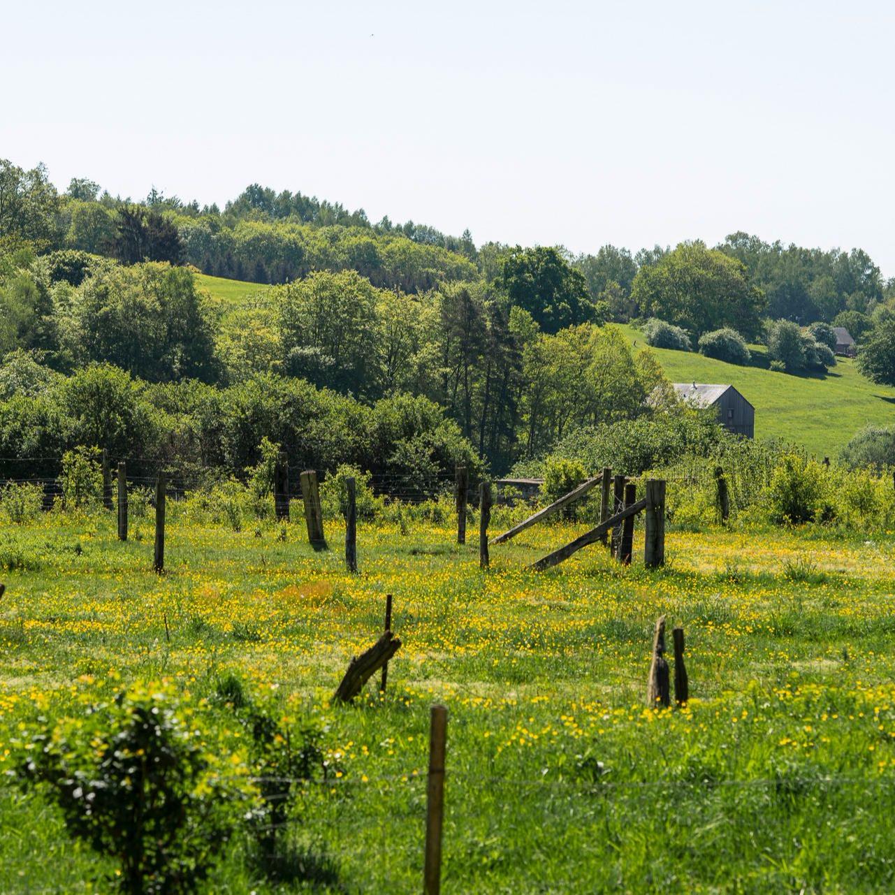 paysage riche en verdure